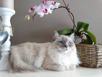 adorable-animal-basket-breed-208773