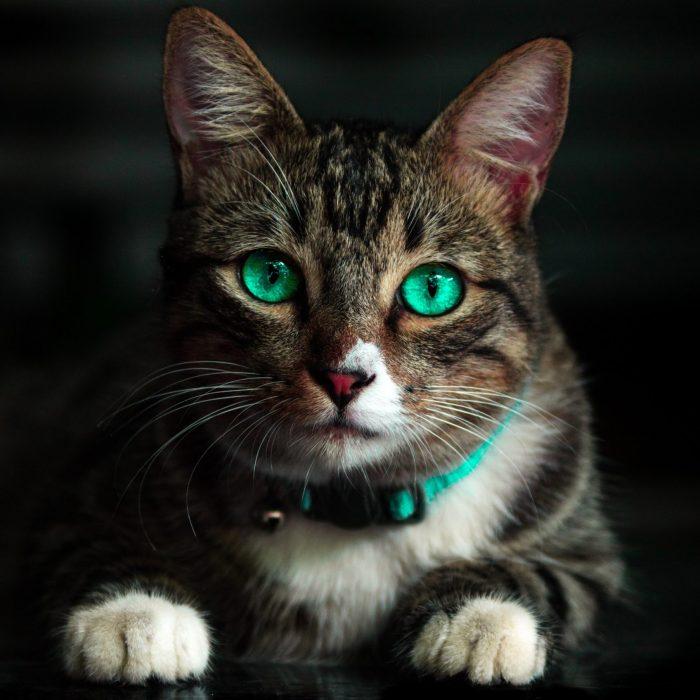 adorable-animal-blur-cat-617278