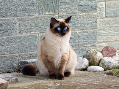 adorable-animal-cat-cat-s-eyes-357141