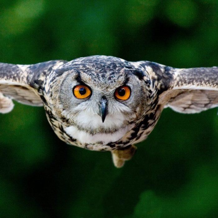 animal-animal-photography-avian-beak-357159