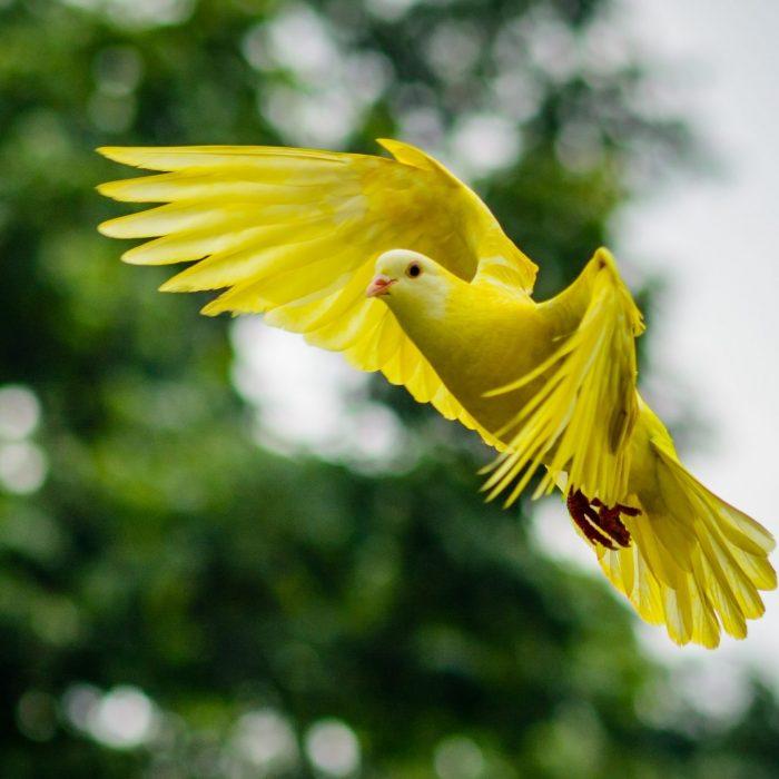 animal-avian-bird-bright-459198