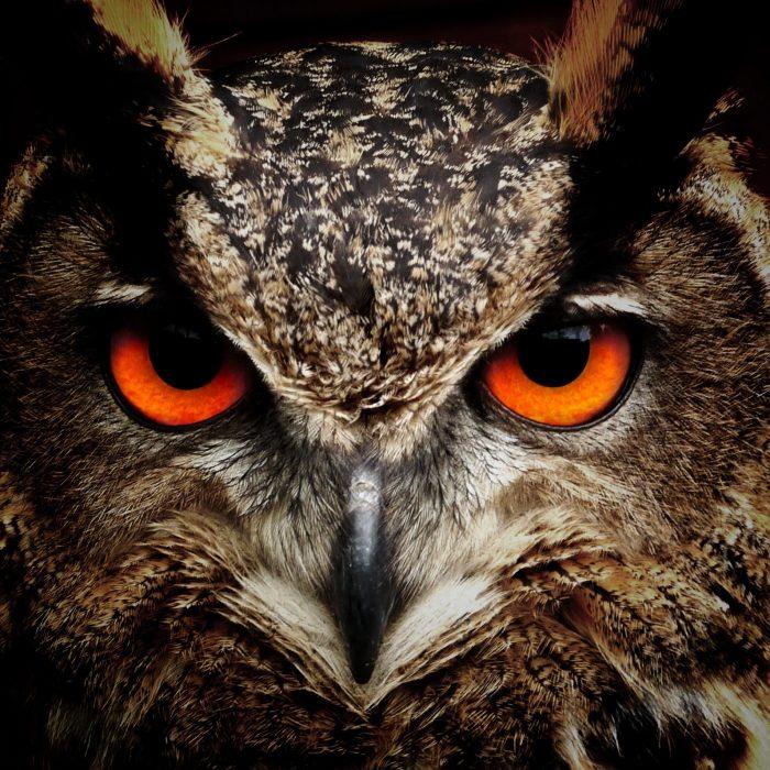 bird-eyes-animals-birds-86596