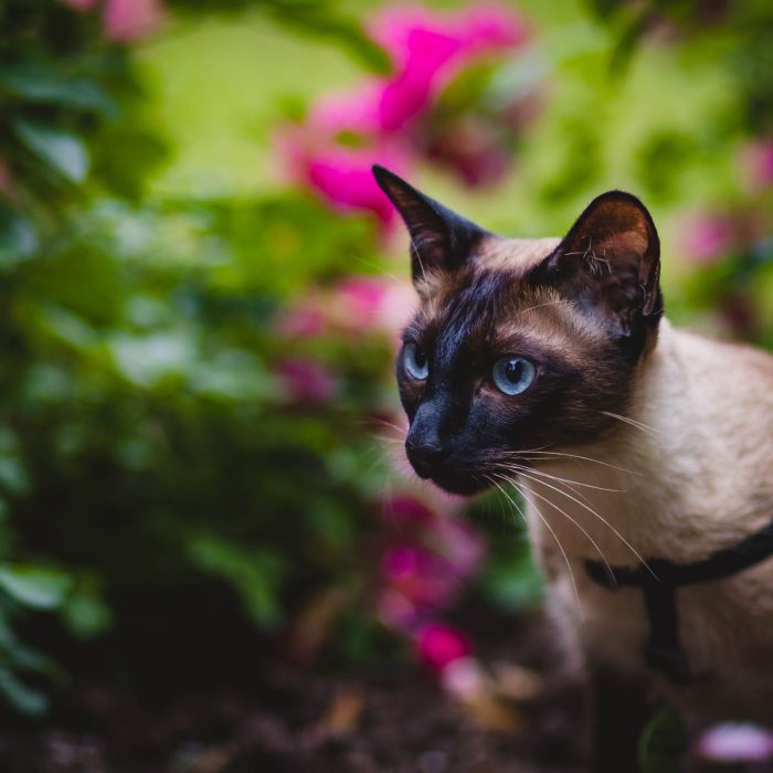 black-and-grey-cat-in-selective-focus-photography-1262940