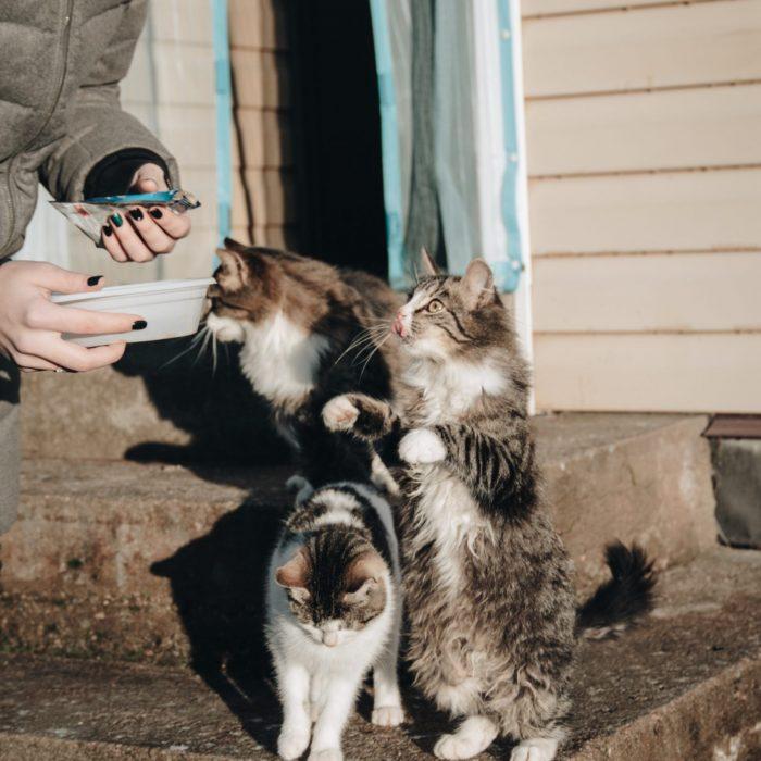 black-and-white-bicolor-cat-3318214
