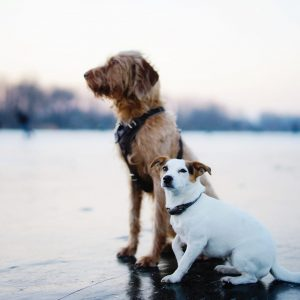 brown-and-white-dogs-sitting-on-field-3568134