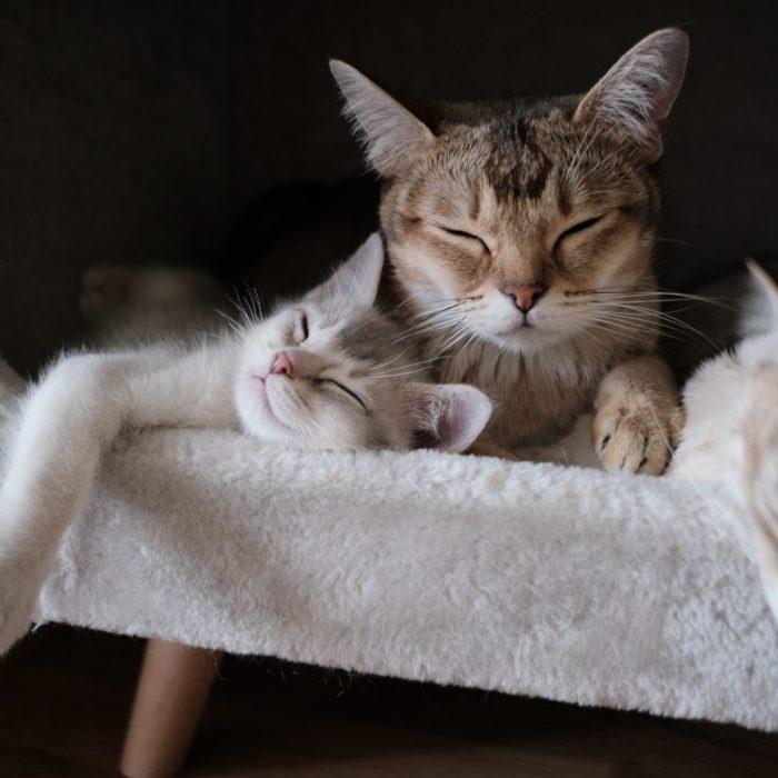 close-up-photo-of-tabby-cats-sleeping-2693561