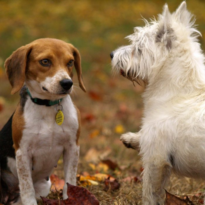 dogs-pets-puppies-animals-38008