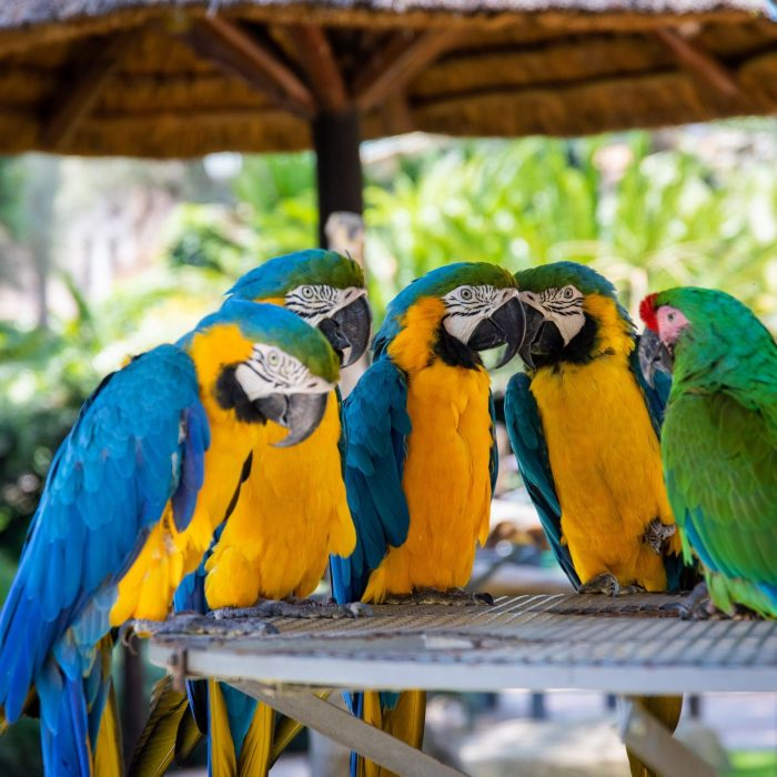 five-parrots-perched-on-brown-wooden-surface-1599452