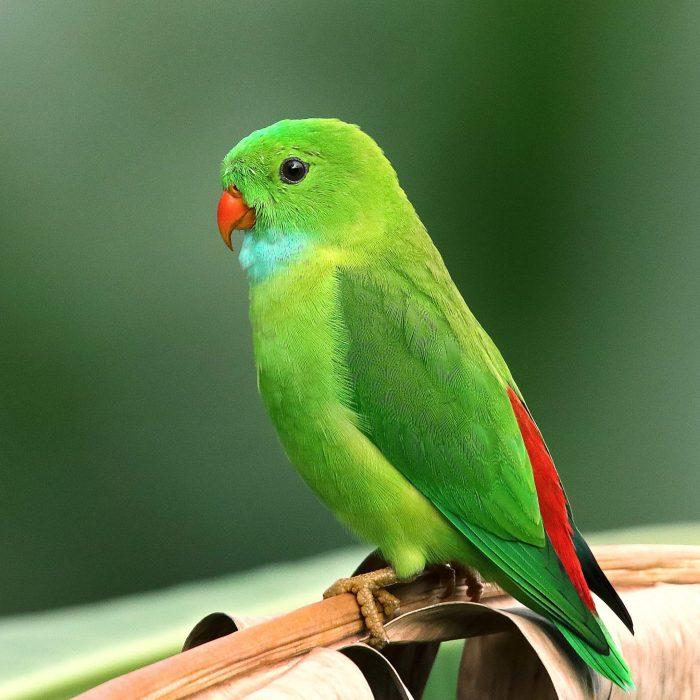 green-bird-1661179