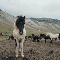 herd-of-horses-2659484
