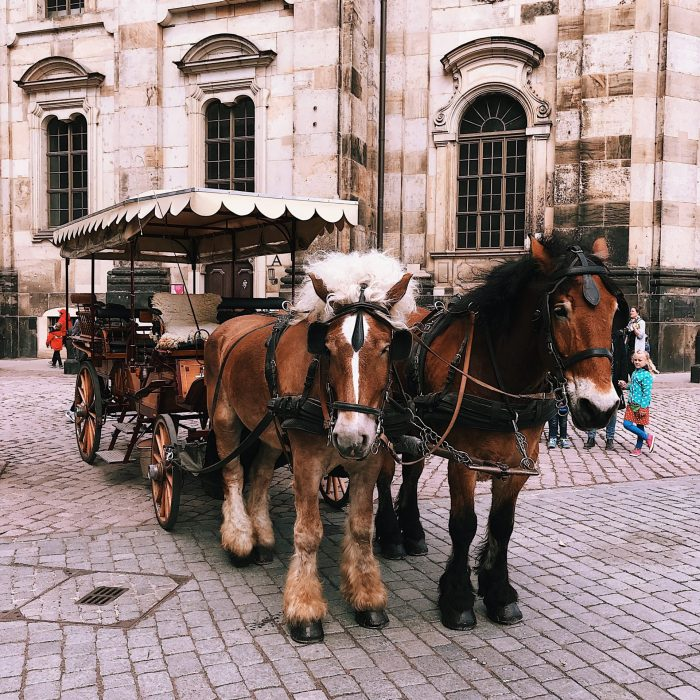 horses-and-buggy-2253623