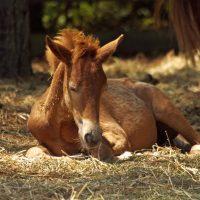 horses-horse-pony-foal-37983