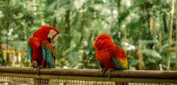 photo-of-scarlet-macaws-2013805