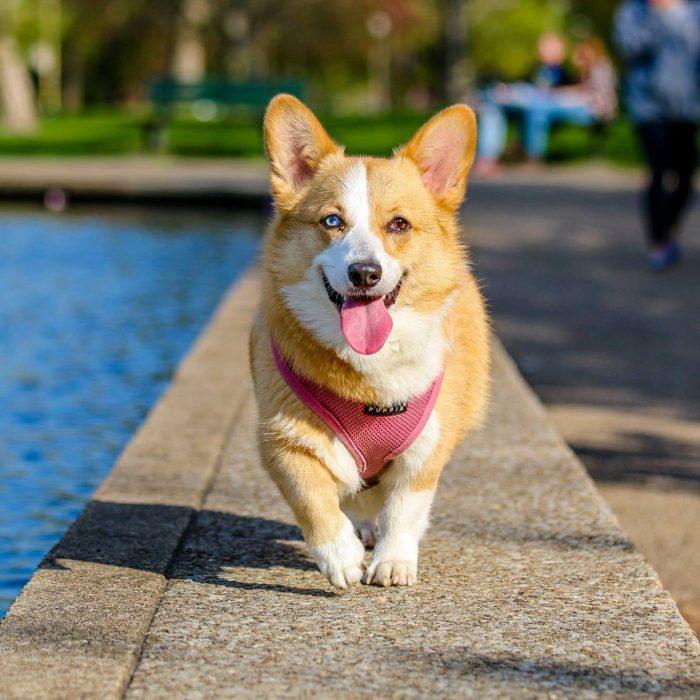 photographer-animal-photography-dog-58997