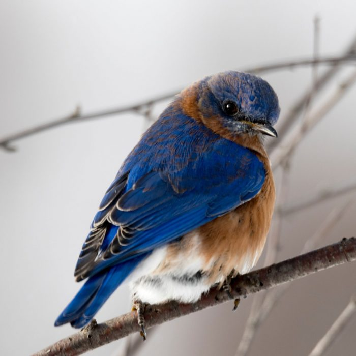 photography-of-small-blue-and-brown-bird-792416