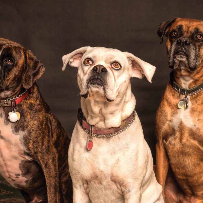 photography-of-three-dogs-looking-up-850602