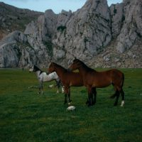 two-brown-horses-and-grey-2458400