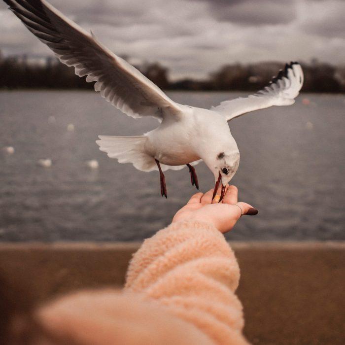 white-bird-on-picking-food-3651618