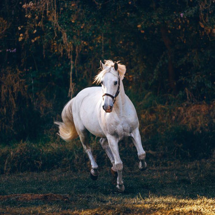 white-horse-running-on-green-field-1996337